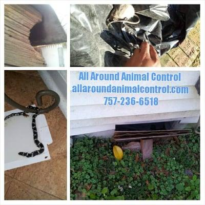 All Around Animal Control
