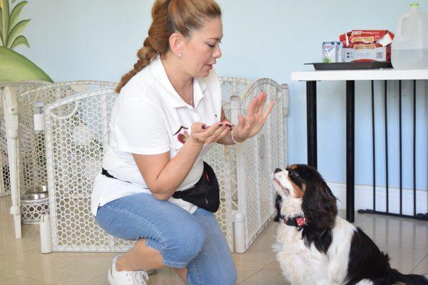 TLC Pet Boarding LLC