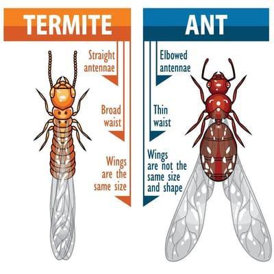 Pinellas Termite and Pest Control Inc.
