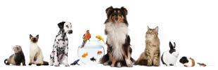 Pet and Bird Clinic
