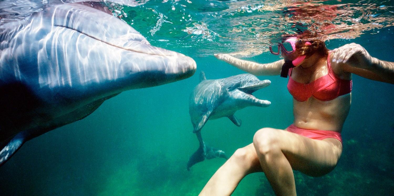 Dolphin Paradise Tours