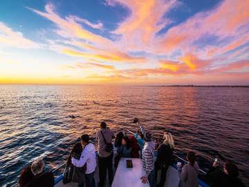 Newport Landing Whale Watching Cruises