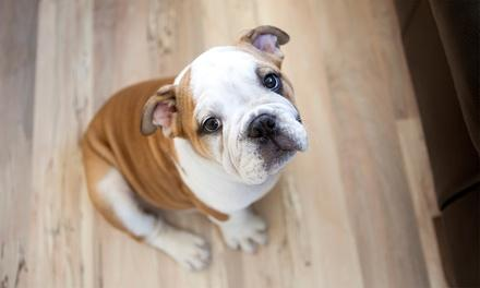 Good Dog Training Center & Doggie Resort