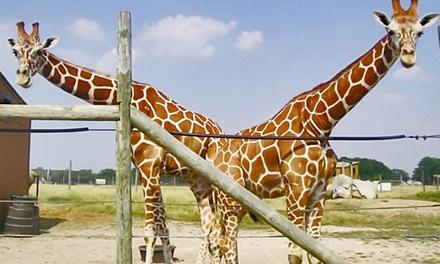 AFRICAN SAFARI-WILDLIFE PARK