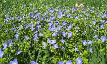 Fernwood Botanical Garden and Nature Preserve