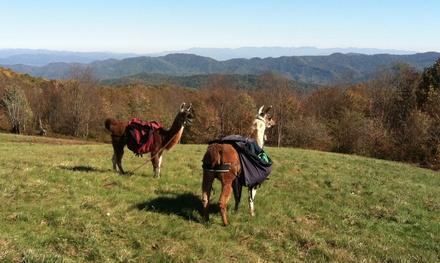 Smoky Mountain Llama Treks