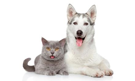 Best Friends Veterinary Hospital