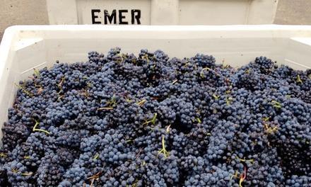 Emerson Vineyards