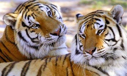 Wildlife Survival Sanctuary