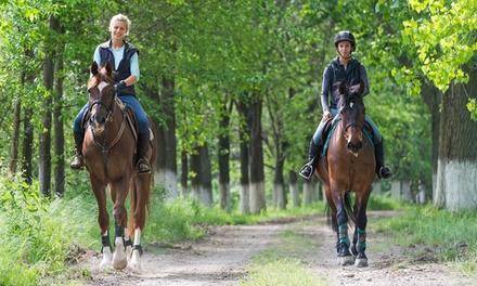 Horse Healing Adventures