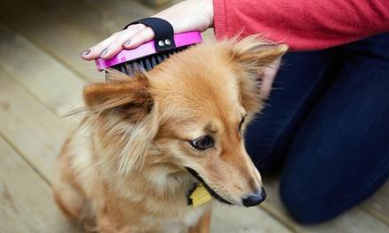 Paws Up Pet Salon