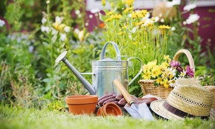 Williams Magical Garden Center & Landscape