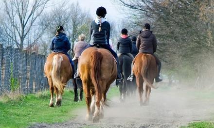 The Lazy Horse Equine Center