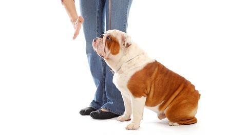Artisan Dog Training