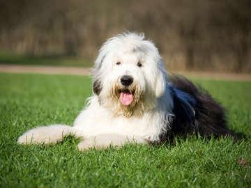 UrgentVet Pet Clinic