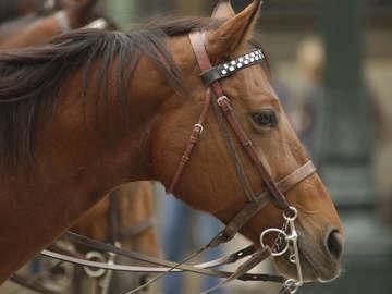 Sunshine and Daydreams Horseback Riding