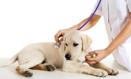Edgewater Pet Clinic