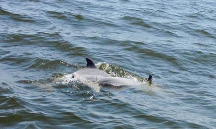 Dolphin Tales
