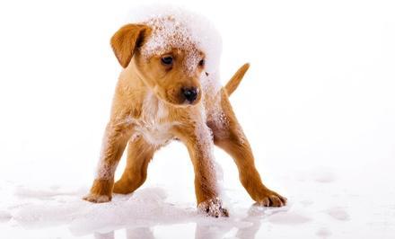 Puppy Paws Pet Shop