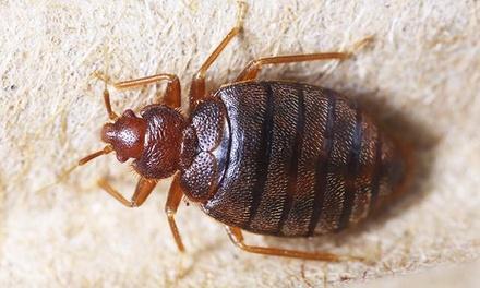 Bug Solution Pest Management