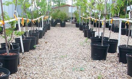 Arbolito Horticulture