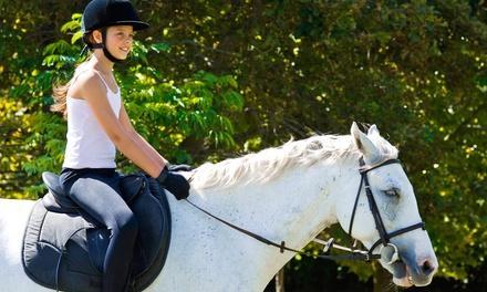 Hi Stepping Equestrian Center
