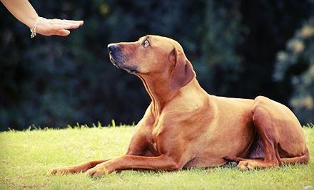 Bad To The Bone Dog Training