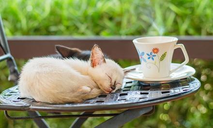 Gatos y Galletas
