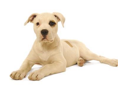 K-9 Design Dog Grooming