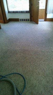 ProMax Carpet Clean
