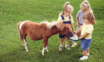 Pony Tales Farm