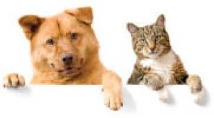 Farley Veterinary