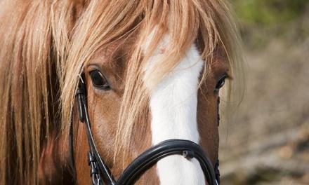 Glitz & Glamour Horseback Riding