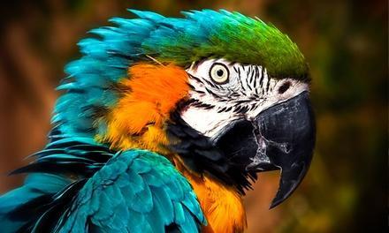 Eagle Rock's Promised Land Zoo