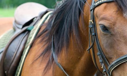 Island Eventing And Horseback Riding