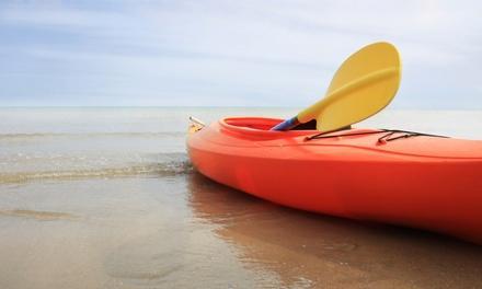 Penguin Paddling Kayak Tours