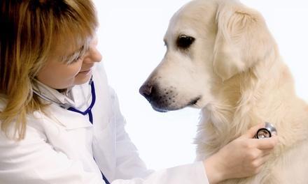 Camino Seco Pet Clinic