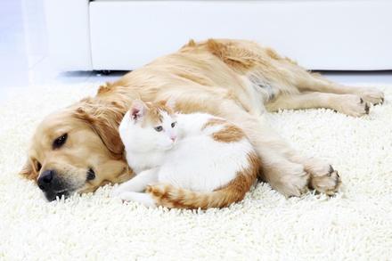 A Foxy Pup Pet Services LLC
