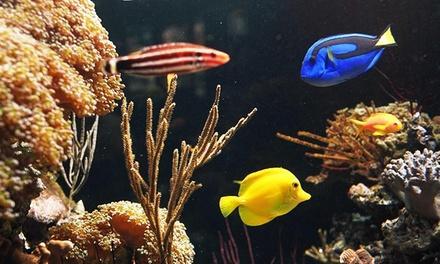 Coral Sea Aquarium