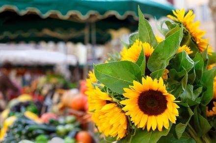Willard Peak Organic Market