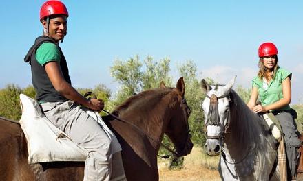 Newport Equestrian
