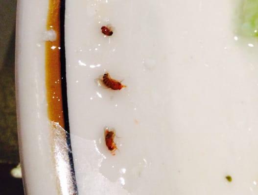 Christos Mediterranean Grille