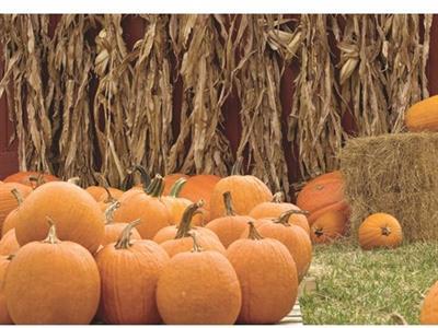 Jumbo's Pumpkin Patch
