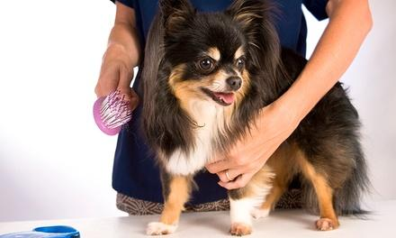 Town & Country Pet Spa