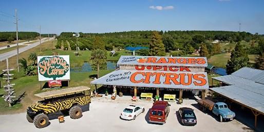 Showcase Of Citrus