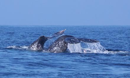 Randy's Fishing & Whale Watching Trips