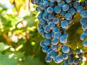 Crown Winery LLC