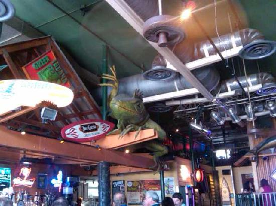 Green Iguana Bar and Grill