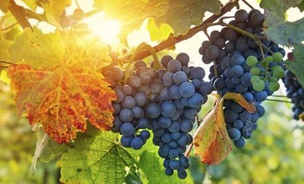 Ankeny Winery Ltd