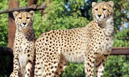 Wildlife World Zoo